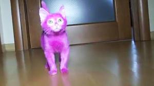 Pinke Katze stirbt durch Vergiftung