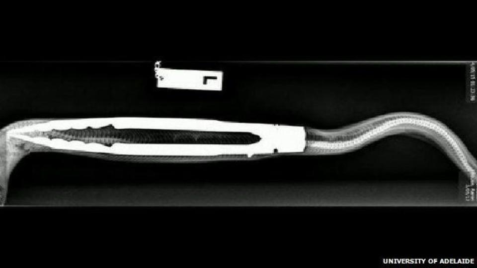 Australien python frisst grillzange rtl de