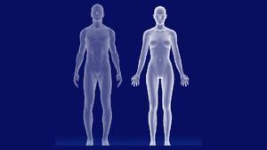 Der virtuelle Körper